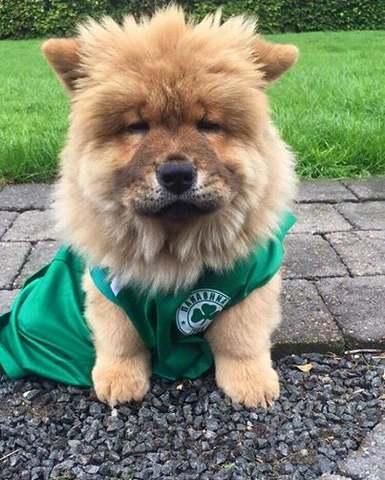 Πράσινος ο… σκύλος του Τελάντερ!